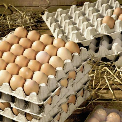 paper-egg-trays